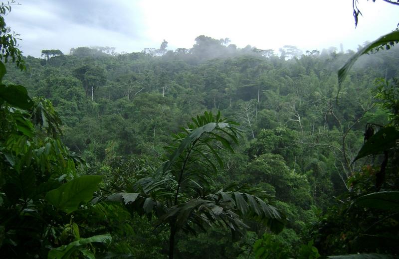 <h3>Reserva Biologica del rio Bigal</h3>